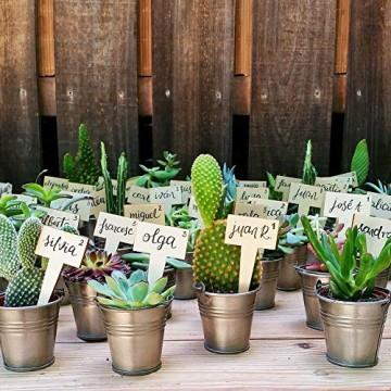 Desertworld Mini Kakteen & Sukkulenten Set - 20 Stück - Topfgröße Ø 6 cm - Pflanzenhöhe 8-15 cm - 3