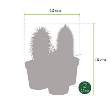Desertworld Mini Kakteen & Sukkulenten Set - 20 Stück - Topfgröße Ø 6 cm - Pflanzenhöhe 8-15 cm - 8