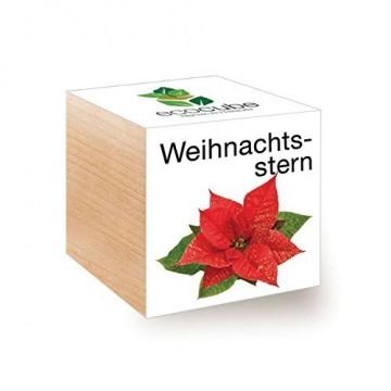 Ecocube Weihnachtsstern im Holzwürfel - 1