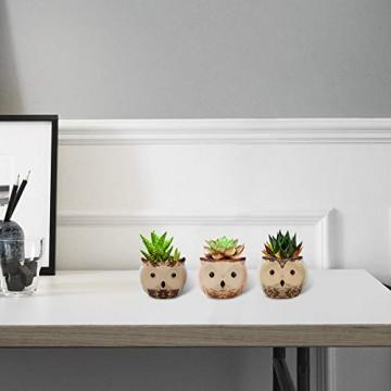 Lewondr Keramik Sukkulenten Töpfe, 6 Stücke 7cm Kaktus Pflanze Töpfe Mini Blumentöpfe Set mit Eulenmuster, Dekorationen für Zuhause, Büro, Balkon - Eule 03 - 5