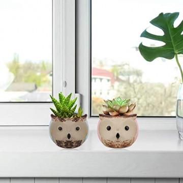 Lewondr Keramik Sukkulenten Töpfe, 6 Stücke 7cm Kaktus Pflanze Töpfe Mini Blumentöpfe Set mit Eulenmuster, Dekorationen für Zuhause, Büro, Balkon - Eule 03 - 6