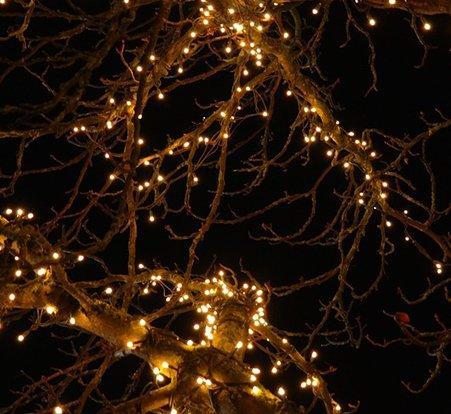 lichterkette_weihnachtsbaum