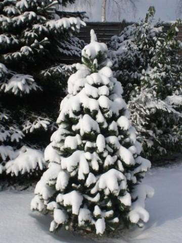 RS Trade HXT 1101 künstlicher Weihnachtsbaum 180 cm (Ø ca. 106 cm) mit 824 Spitzen und Schnellaufbau Klapp-Schirmsystem, schwer entflammbar, unechter Tannenbaum inkl. Metall Christbaum Ständer - 6