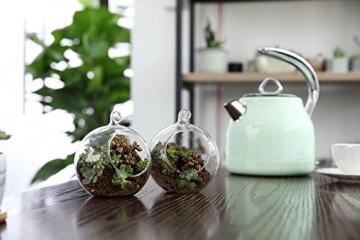 T4U 15cm Glasvase zum Anfhängen 2er-Set, Hängende Glaskugeln Pflanzgefäße für Sukkulenten und Kakteen, Luftpflanzen Halter Teelichthalter… - 5