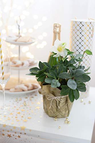 Tischläufer Gold Metallic, Polyester Vliesstoff, 30 cm x 10 m | Tischband | Tischdeko Weihnachten + Adventszeit | Deko Weihnachtsfeier … - 2