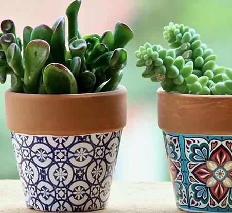weihnachts_kaktus