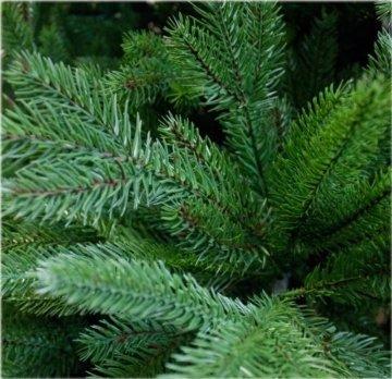 DekoLand Deluxe Pe Spritzguss Weihnachtsbaum künstlich 210 cm (Ø 150 cm) 1174 Zweige (5195 Spitzen), grün, Klappsystem - 5