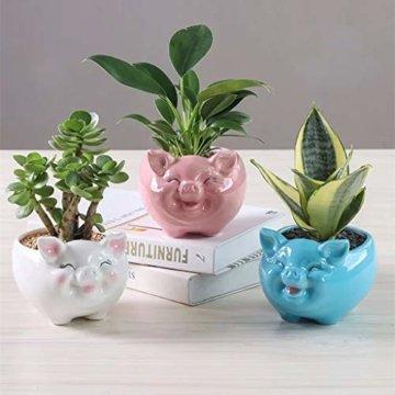 Gemseek Süßer Tier-geformter Sukkulenten-Übertopf mit Drainage-Tablett, Kaktus-/Blumen-Container, Bonsai-Halter für den Innenbereich s schwein - 8
