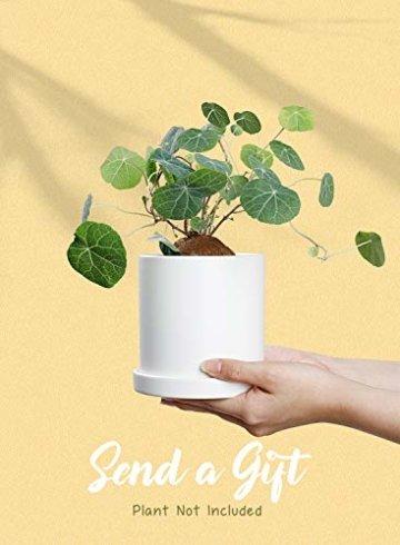 Greenaholics Blumentöpfe – 10,9 cm Keramik matte Oberfläche Zylinder-Keramik Pflanzgefäße für Sukkulenten, Kaktus, Blumen, mit Drainageloch und Tablett, matt weiß - 6