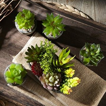 Jobary Set mit 5 künstlichen Sukkulenten mit Töpfen (einschließlich 10 Pflanzen), Bunten und Dekorativen Fälschung Sukkulentenmit Steinen, ideal für Zuhause, Büro und Dekor im Freien - 5