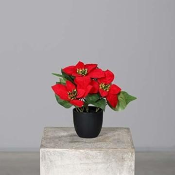mucplants Künstlicher Weihnachtsstern Poinsettie Rot Höhe 25cm im schwarzen Kunststofftopf Kunstpflanze Dekopflanze - 1
