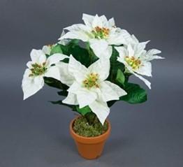 Seidenblumen Roß Weihnachtsstern 42cm weiß im Topf AR künstliche Pflanze Blumen Kunstpflanzen Kunstblumen Poinsettie - 1