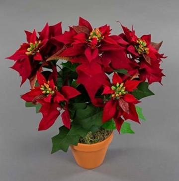 Seidenblumen Roß Weihnachtsstern Nature 38cm samt-rot im Topf PM künstliche Blume Kunstpflanze Kunstblumen Poinsettie - 1