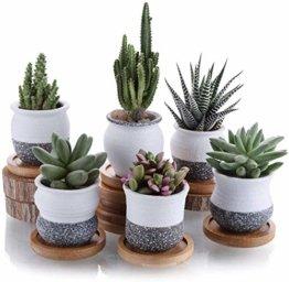 T4U 6cm Japanischer Stil Keramik Sukkulenten Kakteen Töpfe mit Untersetzer 6er-Set, Mini Blumentöpfe für Mini Zimmerpflanzen Moos Bonsai - 1