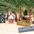 ÖLBAUM-Krippe KS70ng-MF-SKR-T2LF2 XXL Holz-Weihnachtskrippe, mit GRANITBRUNNEN Wassergrand + Premium-DEKOSET Krippenstall, Massivholz edel GEFLAMMT - mit 12 x Premium- Krippenfiguren + Engel - 3