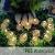Leds Globe Lichterkette, Partybeleuchtung Außen,Warmweiße Kugel Lichterkette, Ideal Weihnachtsbeleuchtung für Innen, Zimmer,IP65 (Warm White, 10m/ 80 Lichter/Batteries) - 3