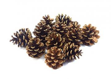 Sepkina 12 Tannenzapfen ca. 5-6cm Schwarzkiefern Zapfen Kiefernzapfen Tanne Naturzapfen Weihnachtsdeko Adventsdeko Herbstdeko - 1