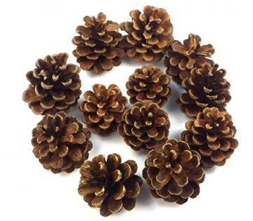 Sepkina 12 Tannenzapfen ca. 5-6cm Schwarzkiefern Zapfen Kiefernzapfen Tanne Naturzapfen Weihnachtsdeko Adventsdeko Herbstdeko - 6