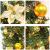 Bcamelys Weihnachtsgirlande mit Beleuchtung Weihnachtsdekoration 270cm Weihnachtsgirlande beleuchtet LED-Schnur beleuchtet Weihnachtstürdekor Weihnachtsgirlande Tannengirlande Lichterkette (Golden) - 4