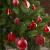 Brubaker 101-teiliges Set Weihnachtskugeln mit Baumspitze Rot Christbaumschmuck - 3