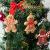 Elionless Weihnachtsbaumschmuck, 12 Stück, traditioneller Ingwer Mann, Weihnachtsbaumschmuck zum Aufhängen, Charms (Lebmann B) - 2
