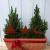 Gartenzaubereien Stern/Baum/Hirsch zum Stecken 3er Set - 2