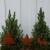 Gartenzaubereien Stern/Baum/Hirsch zum Stecken 3er Set - 3