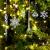 LOVEXIU Weihnachtsdeko Eiszapfen Anhänger 68 Stück,Weihnachtsbaumschmuck, Acryl Eiszapfen Deko,Schneeflocken deko acryl,Christbaumschmuck eiszapfen Schneeflocke Für Hängen Weihnachten Dekoration - 1