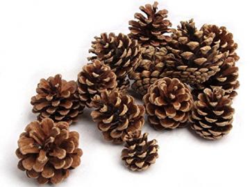 NaDeco Tannenzapfen ca. 5-6cm 1kg Pinus nigra Schwarzkiefern Zapfen Kiefernzapfen Tannen Zapfen Naturzapfen Weihnachtsdeko Adventsdeko - 1
