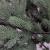 RS Trade HXT 1418 künstlicher PE Spritzguss Weihnachtsbaum 180 cm (Ø ca. 120 cm) mit ca. 3245 Spitzen, schwer entflammbarer Tannenbaum mit Schnellaufbau Klappsysem, inkl. Metall Christbaum Ständer - 4